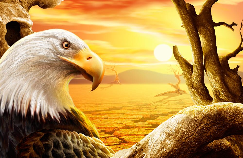 Desert Eagle Wallpaper Photo Manipulation PSD